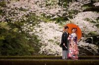 厳島神社挙式 ロケーション撮影 桜