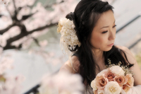 土手沿いの桜と