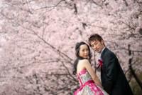 満開の桜並木。